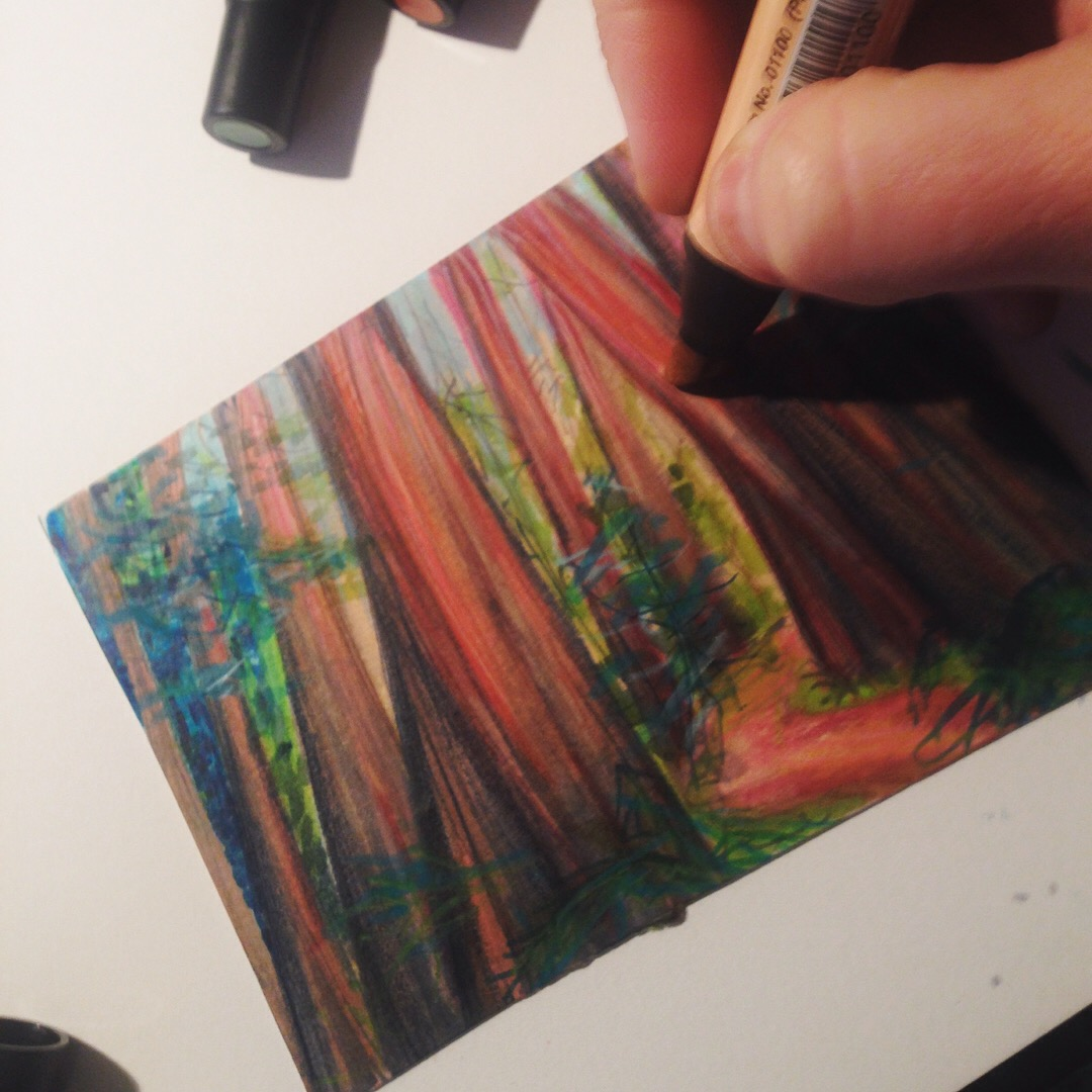Illustrating the Redwoods